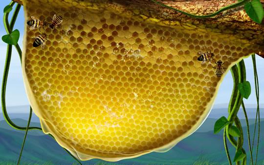 Madu Lebah Tualang