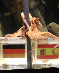 Paul The Octopus Mati