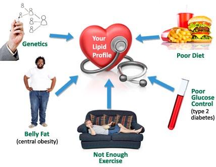 Mengurangkan Kolesterol Dalam Darah