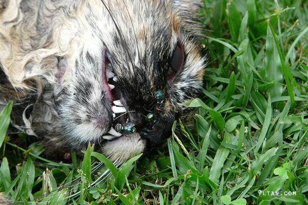 dead-cat2