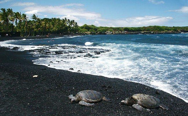 pantai-pasir-hitam-langkawi-with-turtle