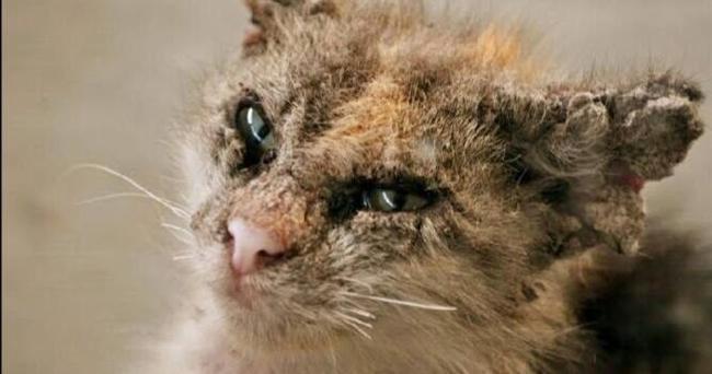 Cara Merawat Kurap Pada Kucing Makanan Untuk Bulu Yang Cantik