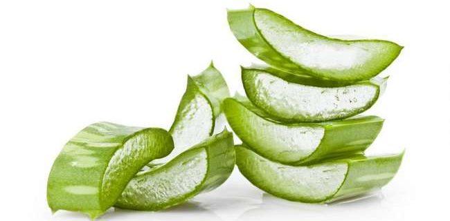 aloe vera untuk cantikkan dan hilangkan kulit berminyak