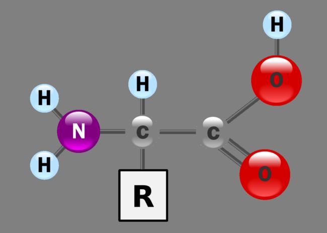 kandungan asid amino untuk besarkan otot dengan betul