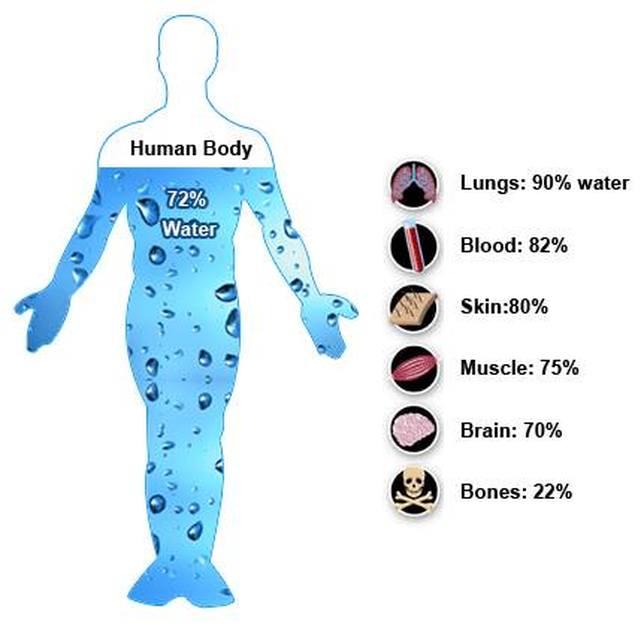 kepentingan air bersih terhadap kesihatan organ dalam badan