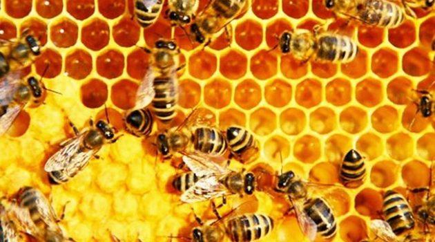 kebaikan madu kelulut 10