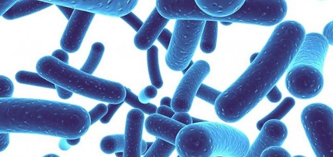 Kelebihan Susu Kambing Probiotik