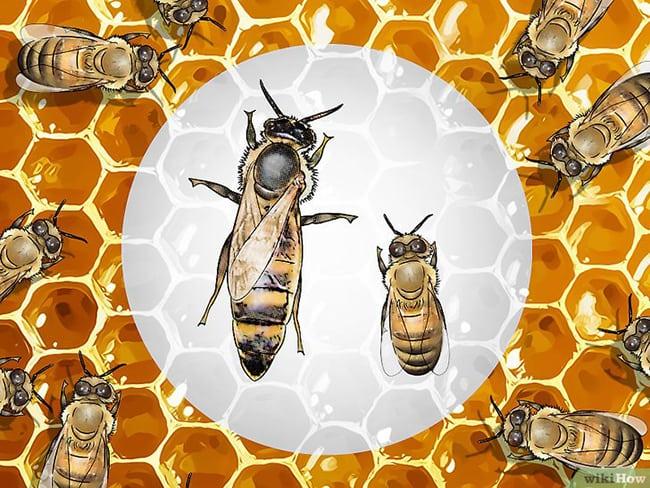 Cara Madu Lebah Dan Aloe Vera Penawar Kepada Pelbagai Penyakit Kronik