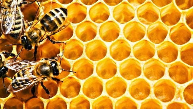 khasiat makan madu lebah asli