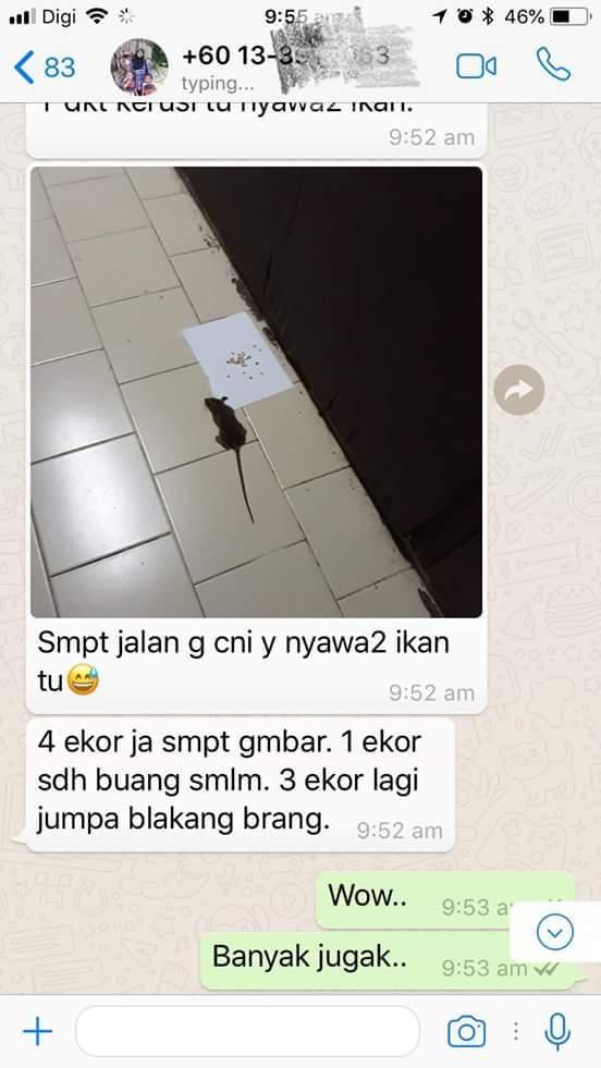 testimoni racun tikus victory murah