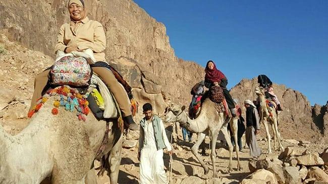 Pakej Pelancongan Murah Mesir Unta
