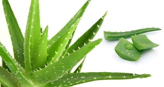 tips menghilangkan parut aloe vera