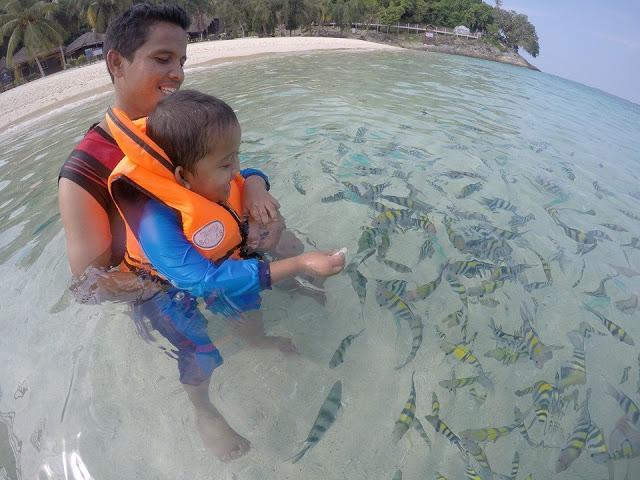 melihat ikan dari dekat di pesisir pantai