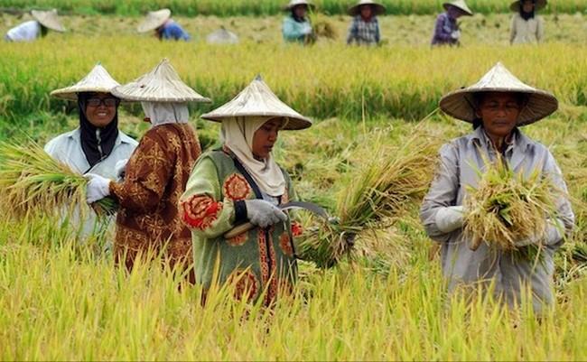 Formula Bakteria Baik Untuk Pertanian Dan Peternakan Di Malaysia